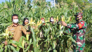 Photo of Kodim Palangka Raya Gandeng Kelurahan Pahandut Wujudkan Ketahanan Pangan